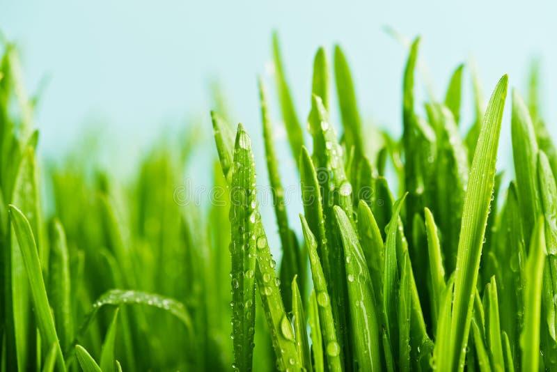 Ciérrese para arriba de hierba verde fresca de la naturaleza imagenes de archivo