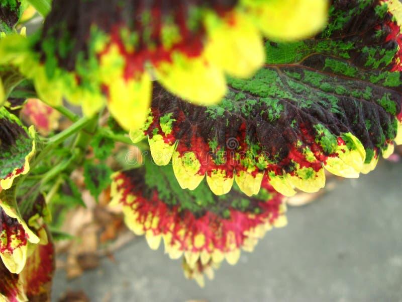 Ciérrese para arriba de hojas coloridas reales imagen de archivo