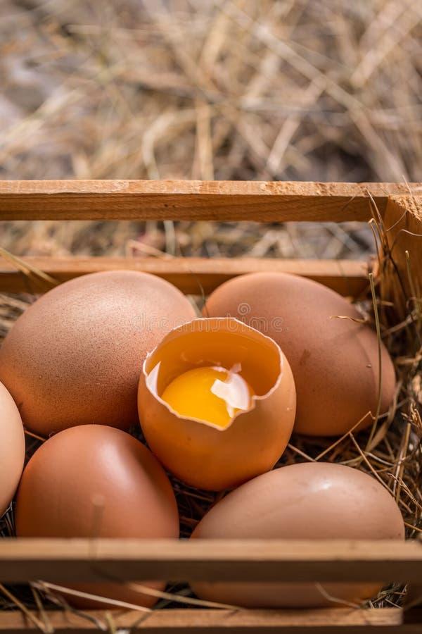 Ciérrese para arriba de huevos marrones foto de archivo