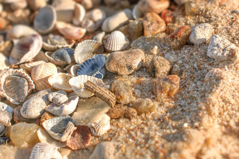 Ciérrese para arriba de la arena mojada con las cáscaras machacadas del mar en día soleado fotos de archivo