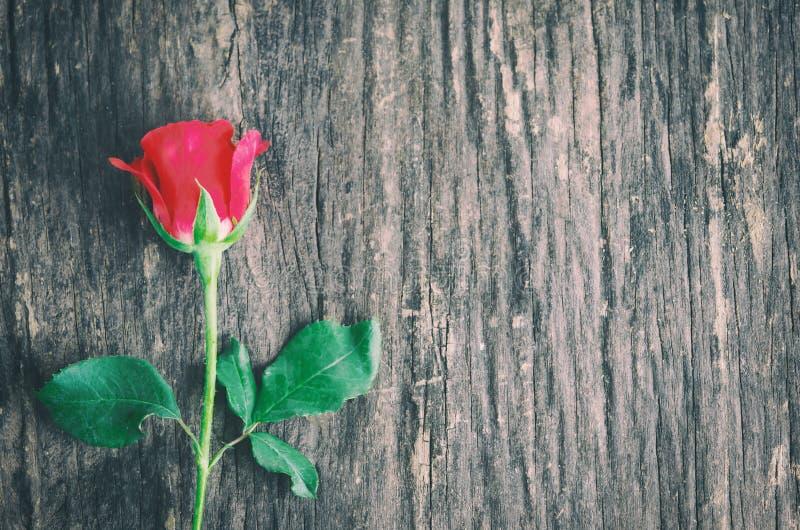 Ciérrese para arriba de la flor de la rosa del rojo en fondo de madera con el vintage a fotografía de archivo