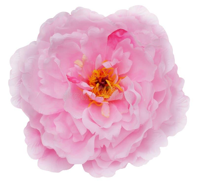 Ciérrese para arriba de la floración colorida de la flor del pétalo fotografía de archivo libre de regalías