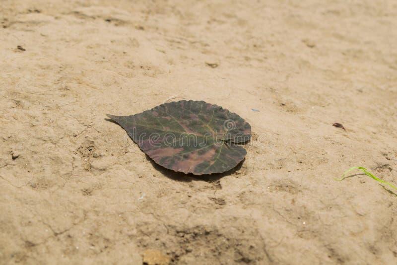 Ciérrese para arriba de la hoja seca en la tierra imagen de archivo