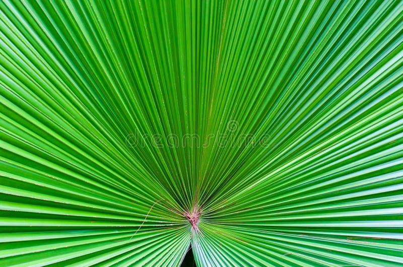 Ciérrese para arriba de la hoja verde en el jardín botánico famoso de Singapur fotografía de archivo