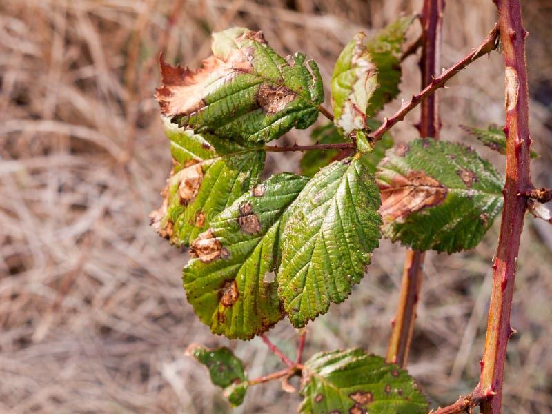 Ciérrese Para Arriba De La Hoja Verde En La Primavera Del Invierno ...