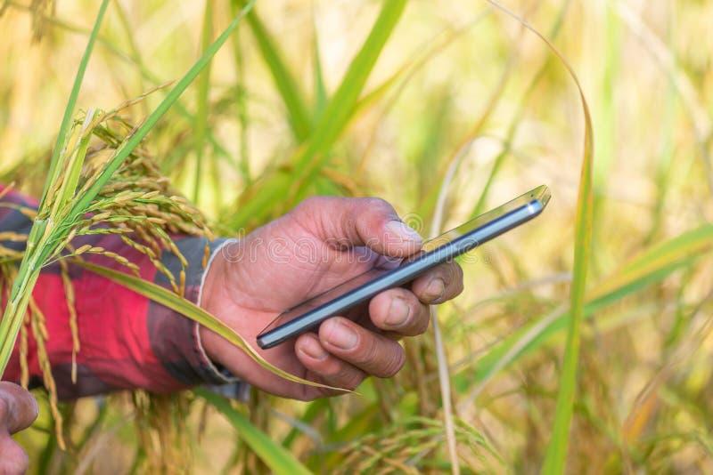 Ciérrese para arriba de la mano del granjero usando el teléfono móvil o la tableta que se coloca adentro imagenes de archivo