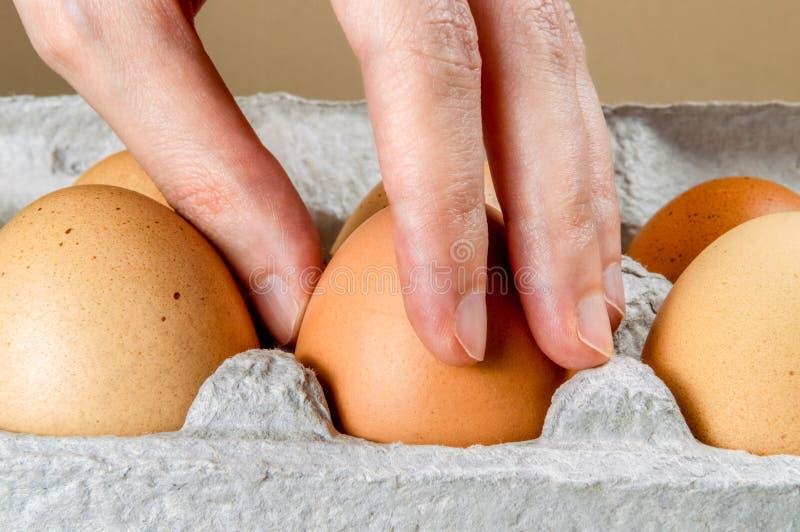 Ciérrese para arriba de la mano femenina que toma un huevo de gallina de un cartón de huevos de la cartulina imagenes de archivo