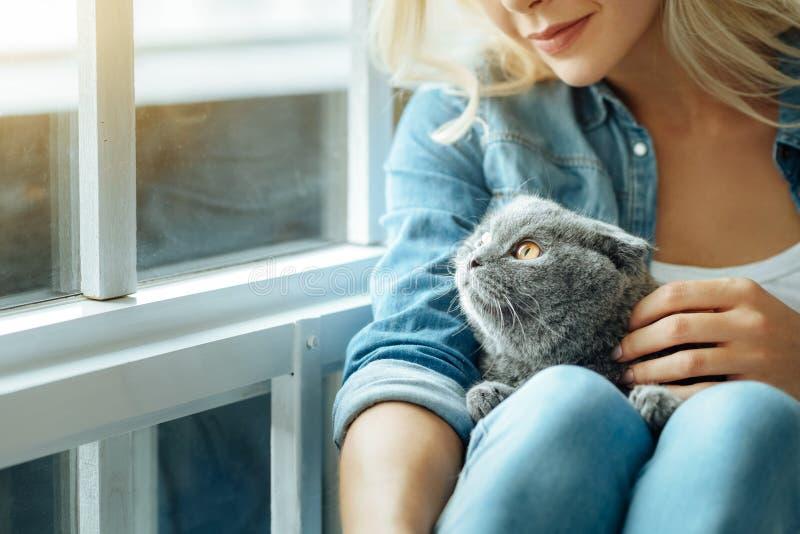 Ciérrese para arriba de la mujer joven que acaricia su gato imagenes de archivo