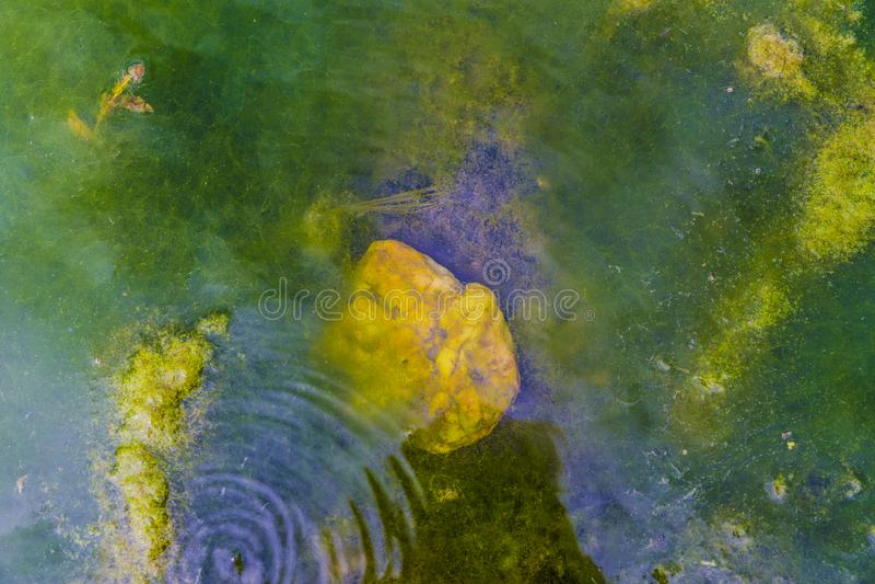 Ciérrese para arriba de la orilla de un río con freza y algas de la rana imágenes de archivo libres de regalías