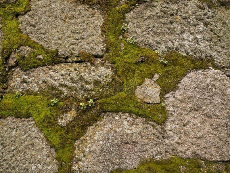 Ciérrese para arriba de la pared de piedra vieja con el musgo que crece entre las rocas fotos de archivo