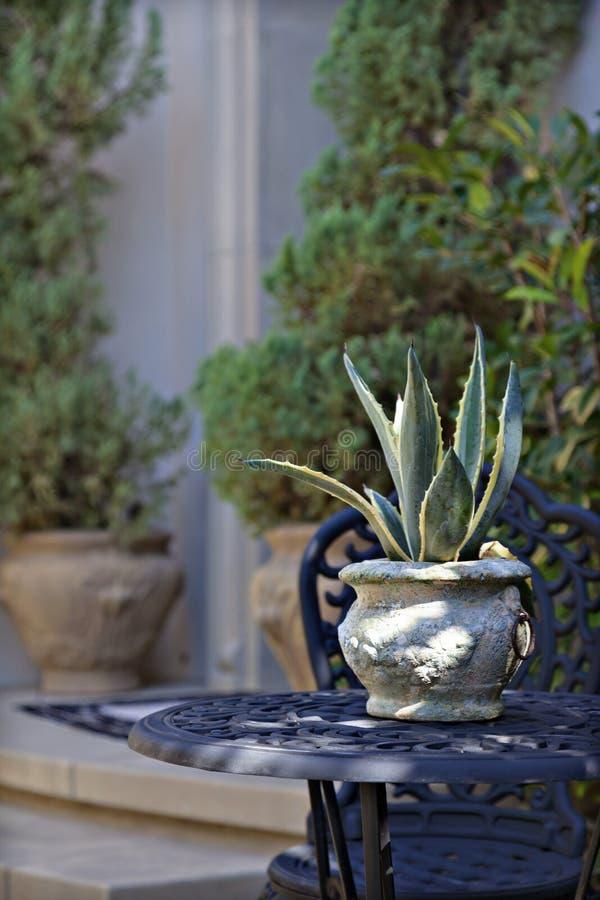 Ciérrese para arriba de la planta de tiesto en la tabla de patio foto de archivo