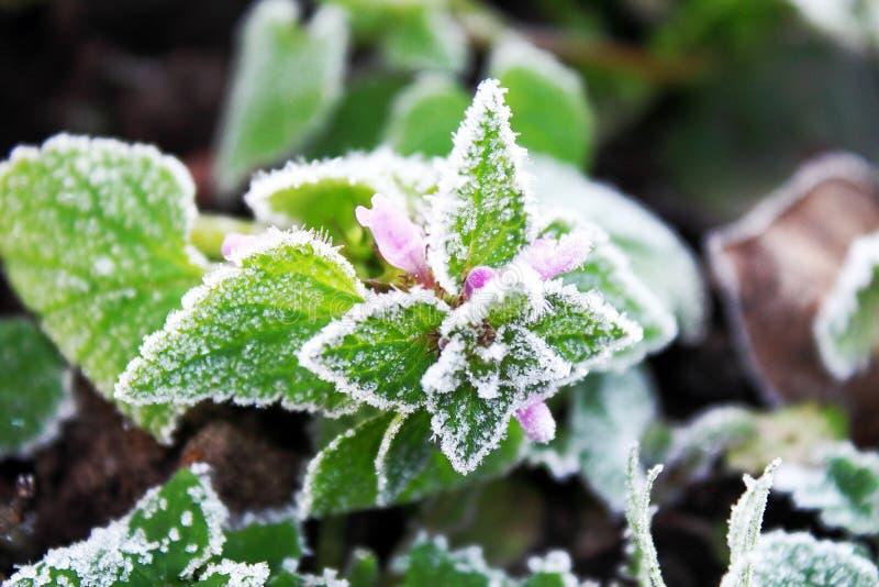 Ciérrese para arriba de la planta verde de la primera primavera brillante fotografía de archivo libre de regalías
