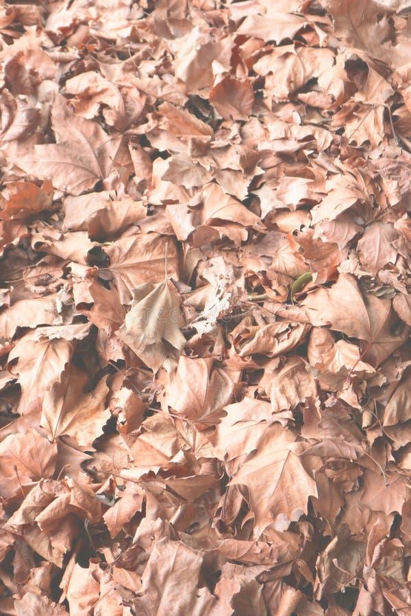Ciérrese para arriba de las hojas de otoño imágenes de archivo libres de regalías