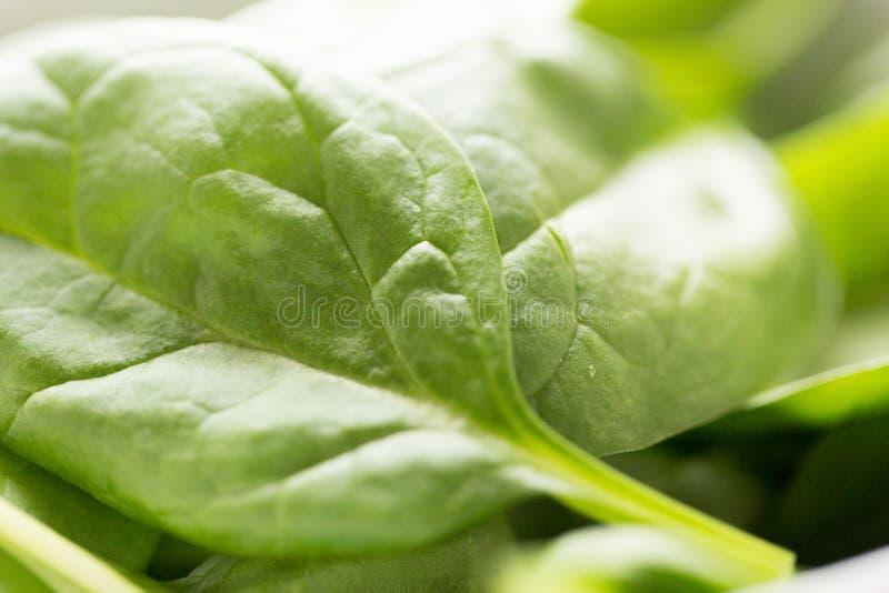 Ciérrese para arriba de las hojas verdes frescas de la espinaca fotos de archivo