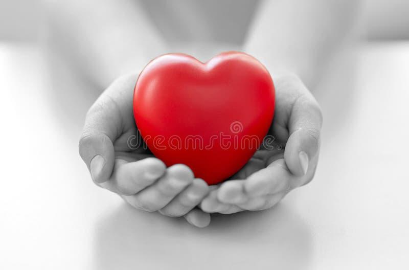Ciérrese para arriba de las manos del niño que llevan a cabo el corazón rojo fotografía de archivo libre de regalías