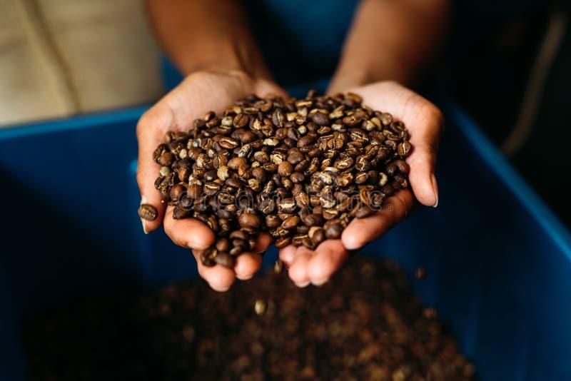 Ciérrese para arriba de las manos de la mujer que sostienen los granos de café fotos de archivo