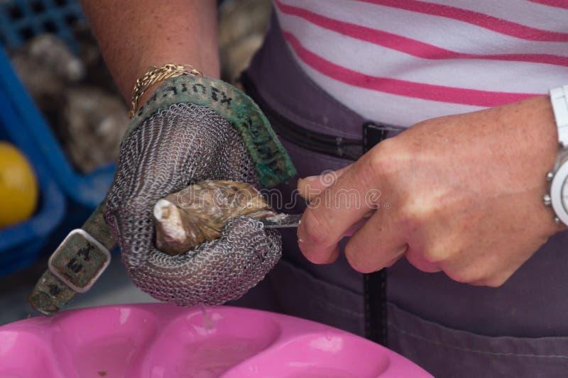 Ciérrese para arriba de las manos que abren una ostra, Cancale, Francia imagen de archivo