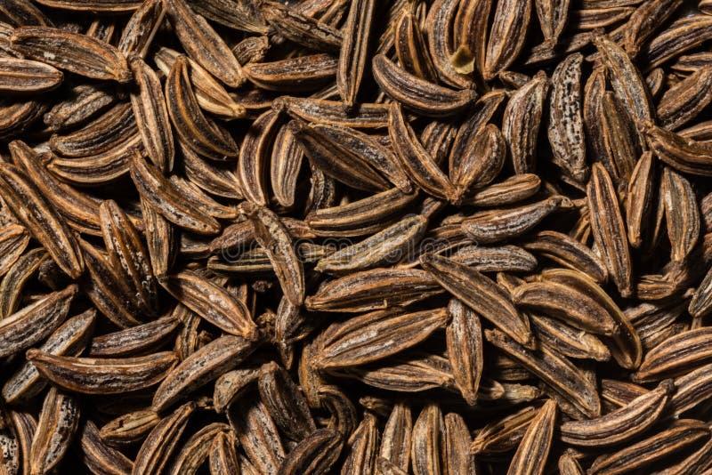 Ciérrese para arriba de las semillas de comino enteras imagen de archivo