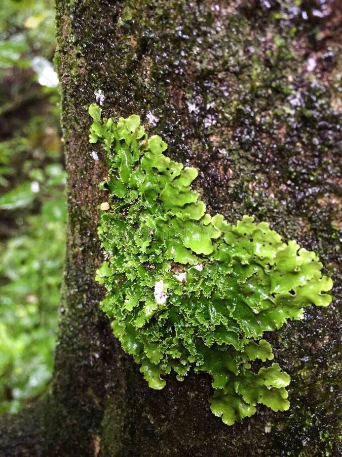 Ciérrese para arriba de liquen en un árbol foto de archivo