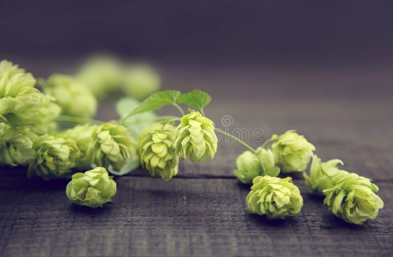Ciérrese para arriba de los conos de salto maduros verdes en backgroun de madera rústico oscuro foto de archivo