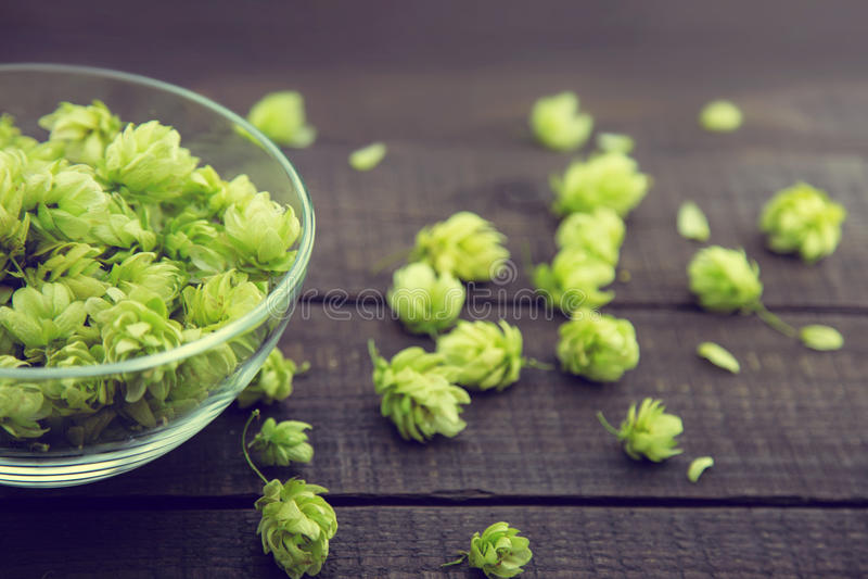 Ciérrese para arriba de los conos de salto maduros verdes en un bol de vidrio sobre fondo de madera rústico oscuro Ingrediente de imagen de archivo