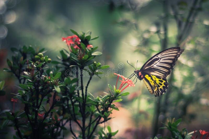 Ciérrese para arriba de mariposa atada amarilla foto de archivo