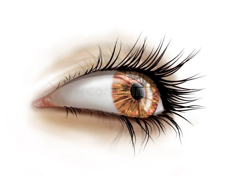 Ciérrese para arriba de ojo con los latigazos largos stock de ilustración