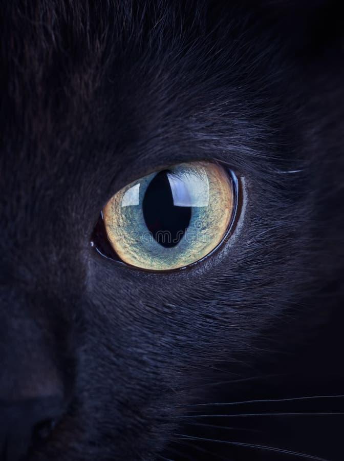 Ciérrese para arriba de ojo intenso de un gato negro foto de archivo libre de regalías