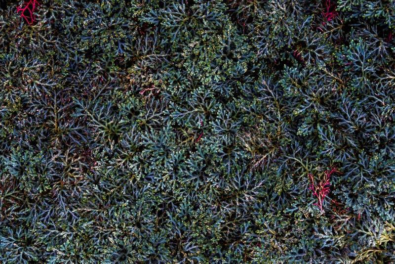 Ciérrese para arriba de pequeñas texturas coloridas de la planta Extracto hermoso GR fotos de archivo libres de regalías