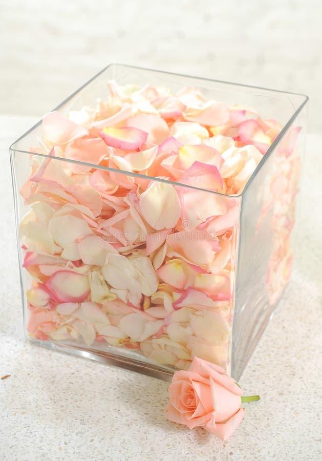 Ciérrese para arriba de petails de la rosa del rosa fotografía de archivo libre de regalías