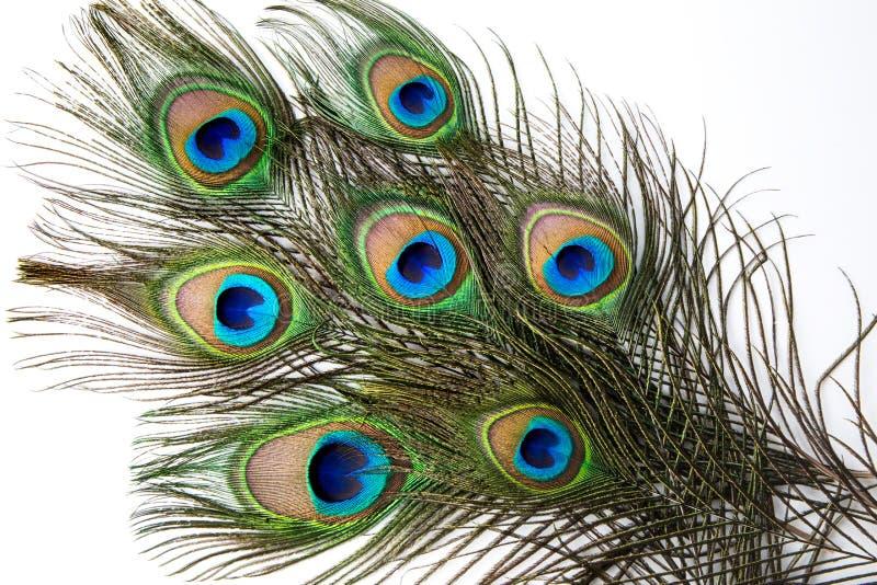 Ciérrese para arriba de pluma del pavo real imagen de archivo