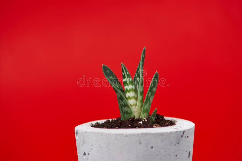 Ciérrese para arriba de succulents minúsculos en potes concretos de DIY El concepto de comodidad casera imágenes de archivo libres de regalías