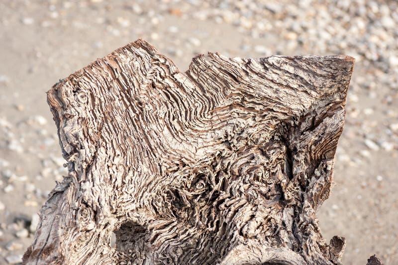 Ciérrese para arriba de tocón de madera putrefacto viejo en la naturaleza con las líneas y la textura envejecidas foto de archivo libre de regalías