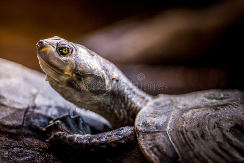 Ciérrese para arriba de tortuga foto de archivo libre de regalías