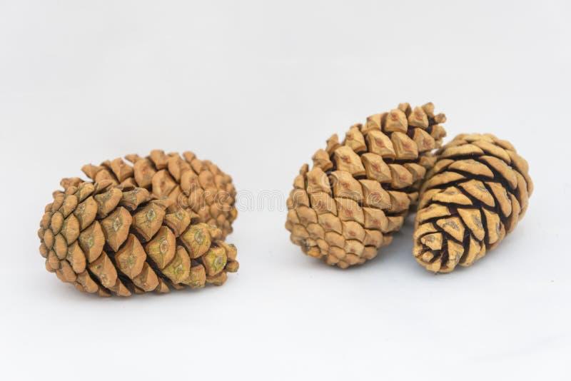 Ciérrese para arriba de tres pinecones en un fondo blanco foto de archivo