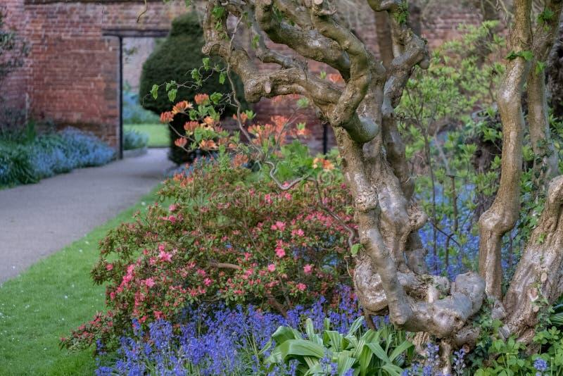 Ciérrese para arriba de tronco de árbol nudoso viejo y de flores coloridas en frontera fuera del jardín emparedado en la casa de  fotos de archivo libres de regalías