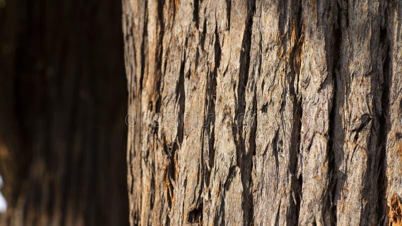 Ciérrese para arriba de tronco de árbol y de su corteza texturizada fotografía de archivo libre de regalías