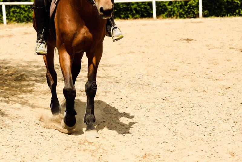 Ciérrese para arriba de trotar de los enganches del caballo foto de archivo libre de regalías
