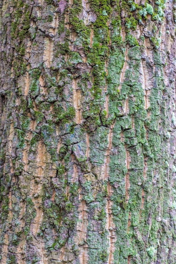 Ciérrese para arriba de un árbol fotos de archivo