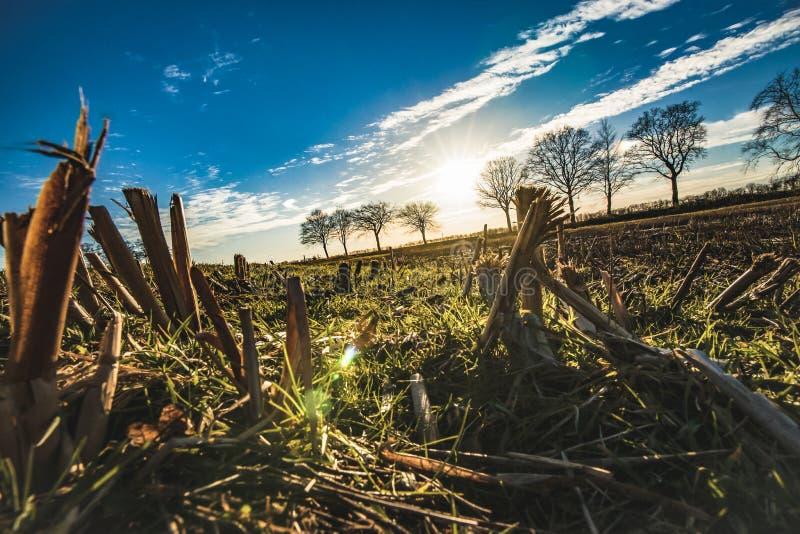 Ciérrese para arriba de un campo de rastrojo inundado de la agricultura en el netherlan imagen de archivo libre de regalías