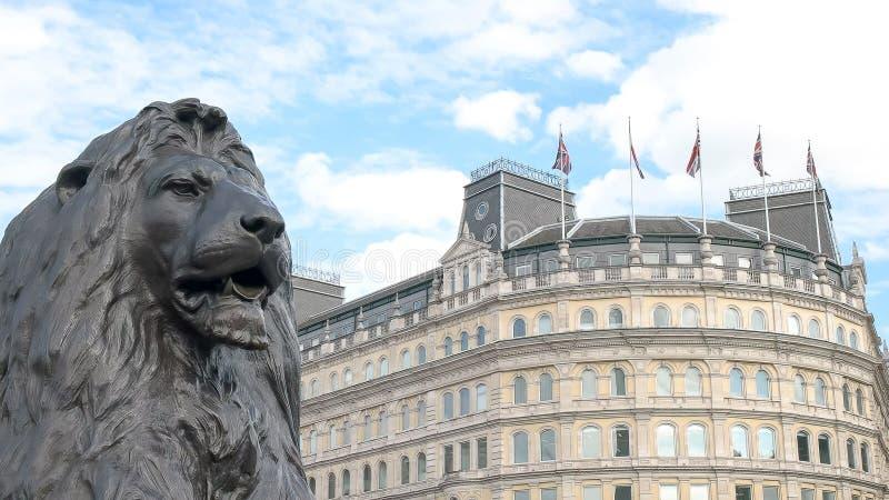 Ciérrese para arriba de un león de bronce en la columna de Nelson en el cuadrado trafalgar, Londres imágenes de archivo libres de regalías
