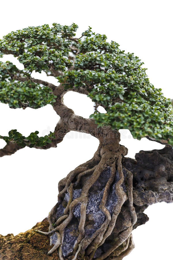 Ciérrese para arriba de un tronco lleno de protuberancias foto de archivo