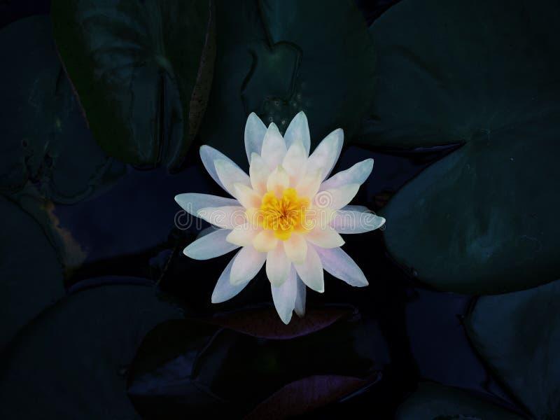 Ciérrese para arriba de una flor blanca imagen de archivo libre de regalías