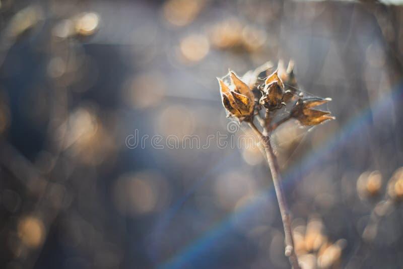 Ciérrese para arriba de una flor secada con el spiderweb en él imagenes de archivo