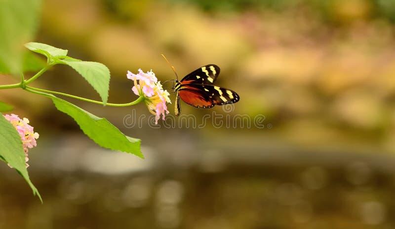 Ciérrese para arriba de una mariposa hermosa imagen de archivo libre de regalías