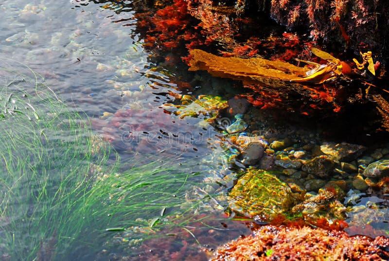 Ciérrese para arriba de una piscina de la marea en el Laguna Beach California imágenes de archivo libres de regalías