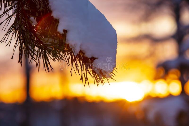 Ciérrese para arriba de una rama de árbol con nieve En el fondo es una puesta del sol colorida imagenes de archivo