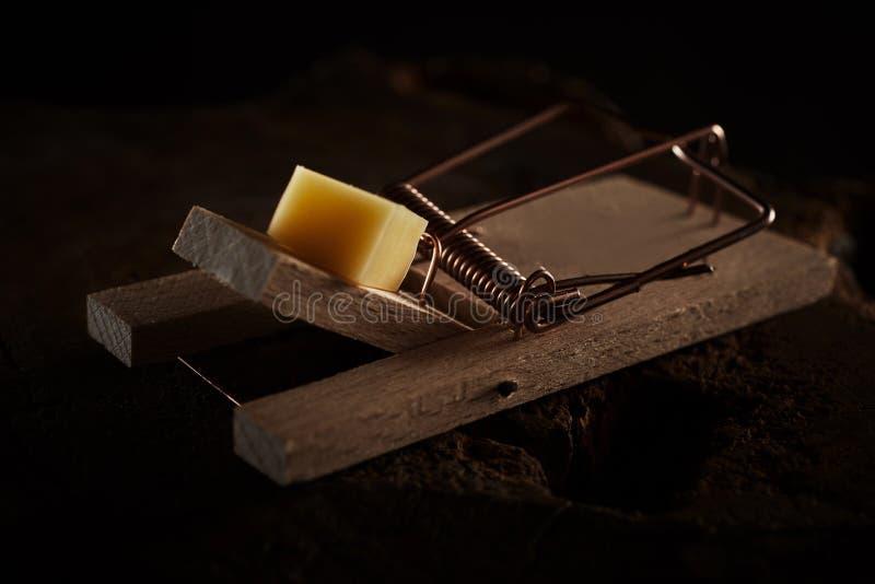 Ciérrese para arriba de una trampa del ratón hostigada con queso imagen de archivo