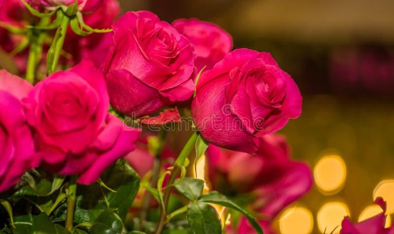 Ciérrese para arriba del foco selectivo del detalle de pétalos de la rosa rosada hermosa fotos de archivo