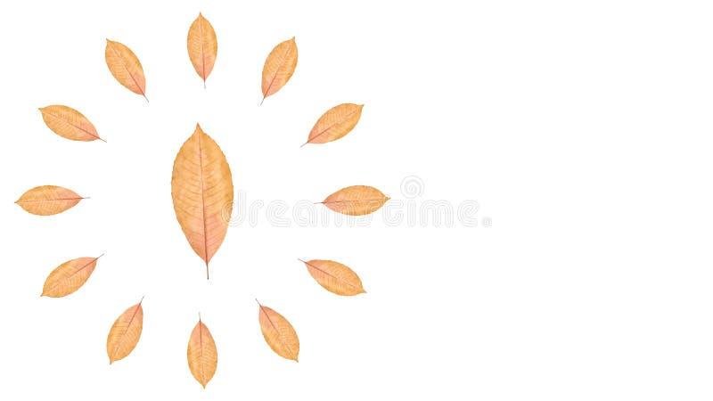 Ciérrese para arriba del fondo amarillo de la hoja del otoño, composición del reloj imagenes de archivo
